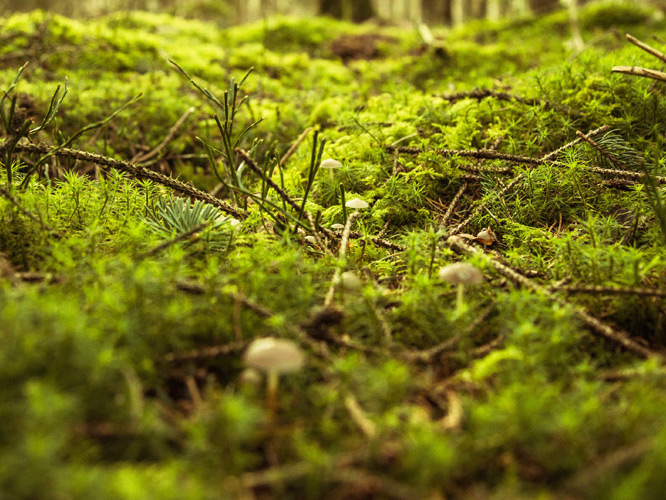 Closeup of a forest floor with moss